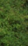 energetic face multiple tree (tree leaves)