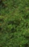 energetic face multiple tree (tree leaves) flip