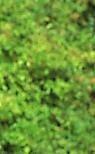 energetic face multiple tree (tree leaves) light