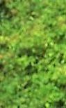 energetic face multiple tree (tree leaves) light flip