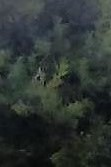 oak tree with half face multiple within front yard (recording with tablet) flip