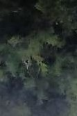 oak tree with half face multiple within front yard (recording with tablet) rotate