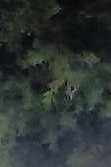 oak tree with half face multiple within front yard (recording with tablet) flip rotate
